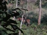 deer at bis hazar tal