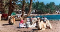 dahab pre-lonely planet, source: http://www.drivelry.com/ban-the-travel-guides/267/