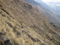 Sue Savage traversing the steep scree slopes on the way to the Khopra ridge @ Roger Henke