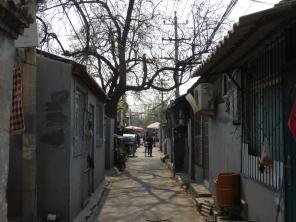 Beijing Hutong between Qianmen and the temple of heaven park source: @marjanslaats