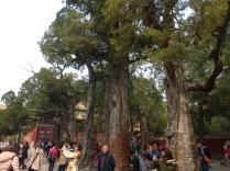 forbidden city4 source: @marjanslaats